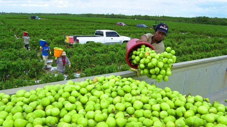 Un porcentaje importante de trabajadores empleados en las areas rurales y en el sector de servicios, es indocumentado.