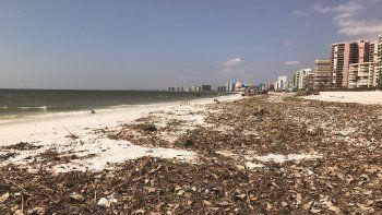 Las playas de Marco Island seguían mostrando un estado deplorable, con rastros de algas y objetos traídos por la marejada del poderoso huracán Irma.