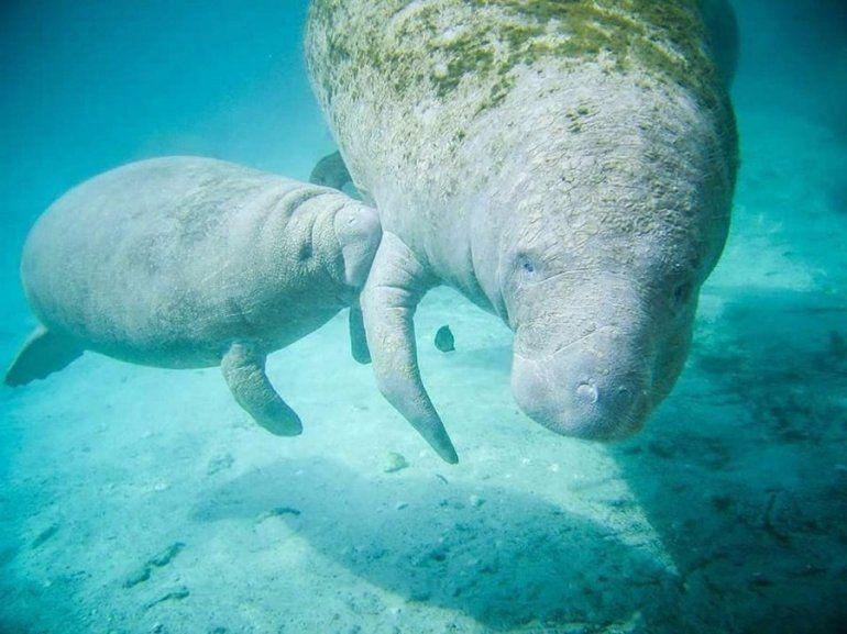 Fotografia de Ashley Aus, en la que una madre alimenta a su cría.