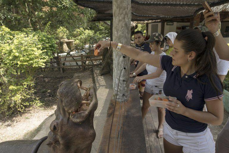 Una mujer alimenta a un hipopótamo en el Parque Temático Hacienda Nápoles de Puerto Triunfo, Colombia, el 12 de febrero del 2020.