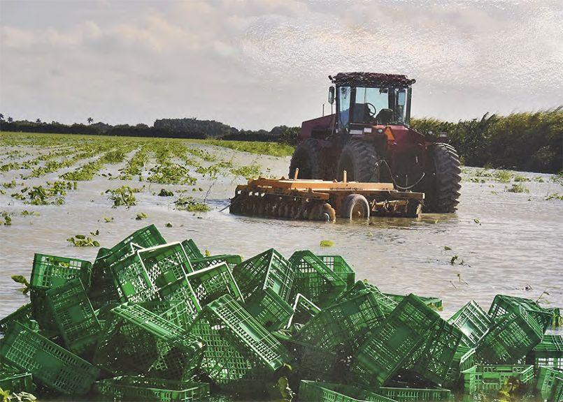 Presentan proyecto para ofrecer créditos a agricultores en el sur de ...
