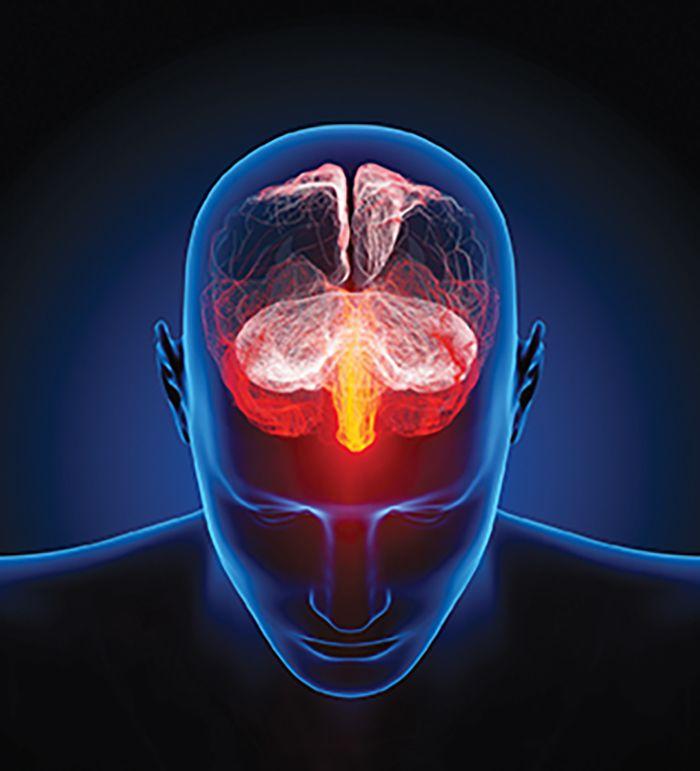 Nuevas pistas sobre cómo opera el hipocampo... | Puranoticia