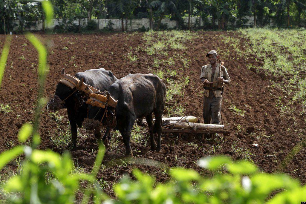 Video ganader a cubana entre la hambruna y el abandono for Ministerio de ganaderia