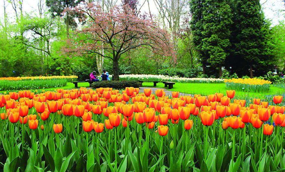 En holanda los tulipanes llegan con la primavera turismo - Jardines de tulipanes en holanda ...