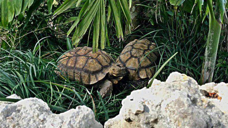 Roban animales de un santuario de Florida tras falso ...