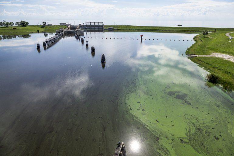 <p></p>Vista general de algas verdeazuladas a la orilla del canal St. Lucie, afluente del lago Okeechobee, donde se depositaron los nutrientes que más tarde transitaron hasta el agua de mar que baña la costa del suroeste de la Florida, entre las localidades de Bradenton y Naples.<p></p>