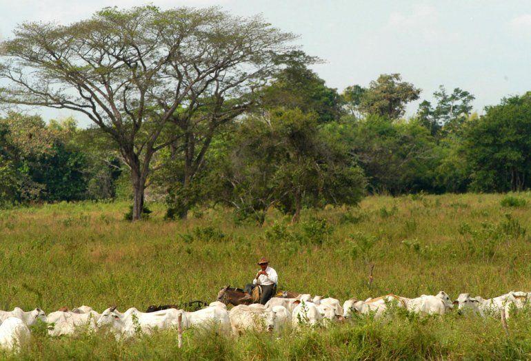 ganaderos de venezuela denuncian expropiaciones de reses venezuela