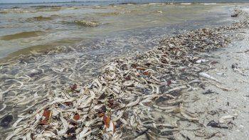 Miles de peces aparecieron muertos en la playa Gulfside City Park, en Sanibel, en agosto 2018.
