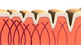 La importancia del colágeno para el cuerpo humano