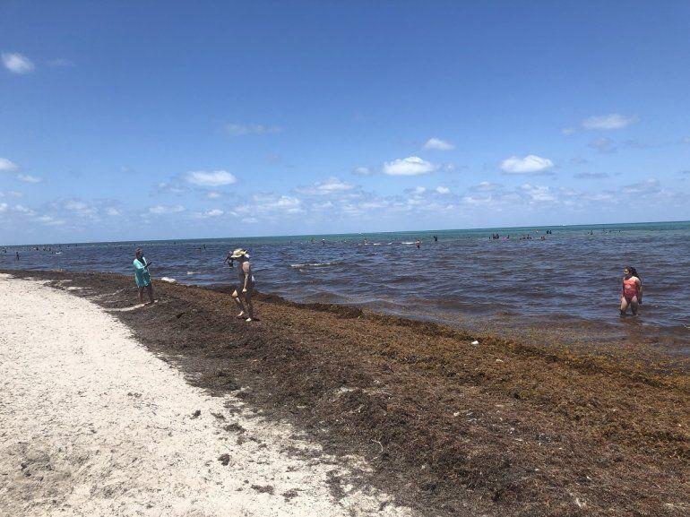 Estas algas marinas pueden resultar incomodas para los bañistas, pero hay que tener en cuenta que forma parte del ecosistema marino.