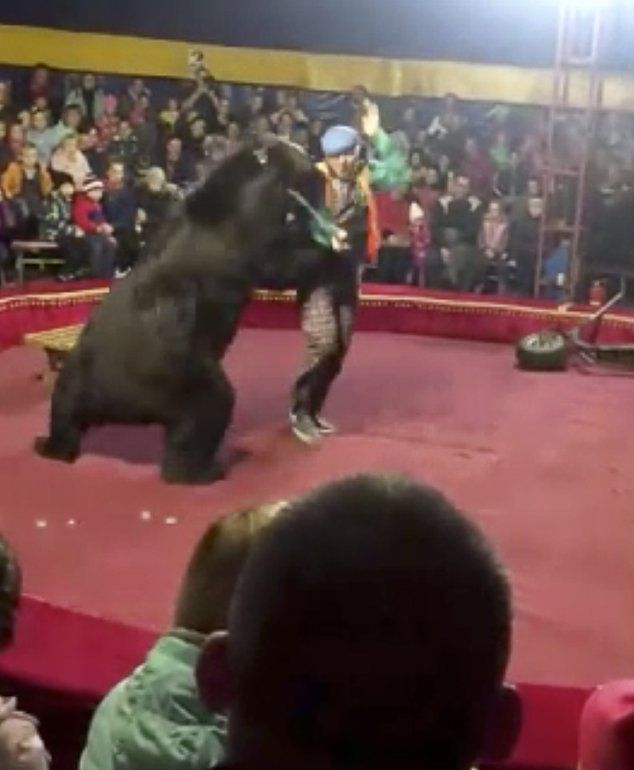 En esta imagenproporcionada por Galina Guryeva se ve a un oso atacar a su entrenador en un circo en Olonets