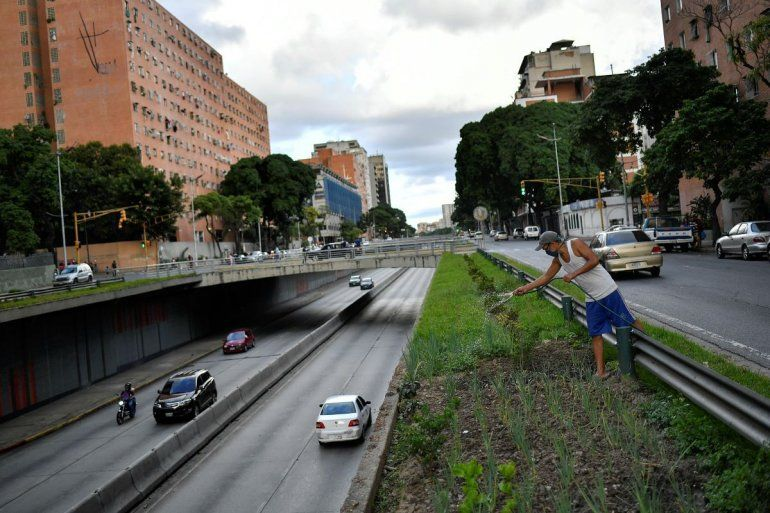 Santos Rodríguez riega su huerto urbano que plantó en un espacio junto a la Avenida Libertador