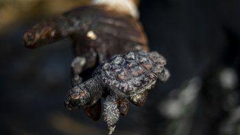 Una mujer muestra una pequeña tortuga marina ya sin vida y cubierta en alquitrán proveniente de un derrame petrolero en el Mar Mediterráneo, en la reserva natural Gador, cerca de la ciudad de Hadera, Israel, el sábado 20 de febrero de 2021.