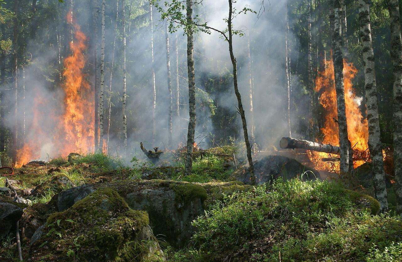 Récord de CO2 emitido por incendios forestales en el hemisferio norte