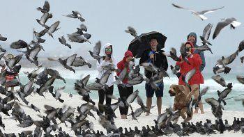 Un grupo de personas observa como un perro asusta a las palomas, en una playa en la isla de Okaloosa, cerca de Fort Walton Beach, Florida, el 18 de octubre de 2019.