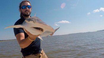 Foto tomada por Colby Griffiths en septiembre de 2015 donde se ve al científico Bryan Keller sosteniendo un tiburón cabeza de martillo en el río North Edisto en Carolina del Sur.