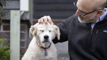Esta foto del lunes 11 de noviembre del 2019 muestra a Daniel Promislow, investigador de la Facultad de Medicina de la Universidad de Washington y principal investigador del Proyecto de Envejecimiento de Perros, al lado de Frisbee en su casa de Seattle.