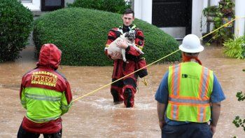 Un miembro del Departamento de Bomberos de Charlotte saca a un perro de unos apartamentos durante una inundación, el jueves 12 de noviembre de 2020, en Charlotte, Carolina del Norte.