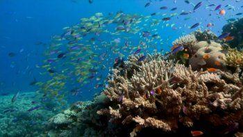 Un estudio publicado en el diario científico Proceedings of the Royal Society, advirtió que el calentamiento global está provocando cambios irreversibles en los corales de la Gran Barrera, en Australia.