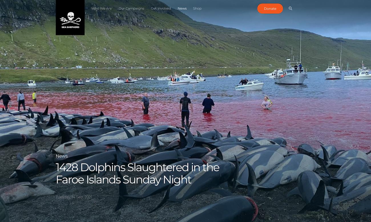 La oenegé ecologista Sea Shepherd, que lleva años luchando contra el grind a delfines y otros cetáceos, denunció la matanza.