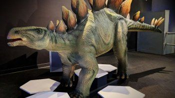 Desde este sábado 25 de enero y hasta el 25 de mayo, los visitantes del Museum of Discovery and Science viajarán en el tiempo con la nueva exposición Expedition: Dinosaur.
