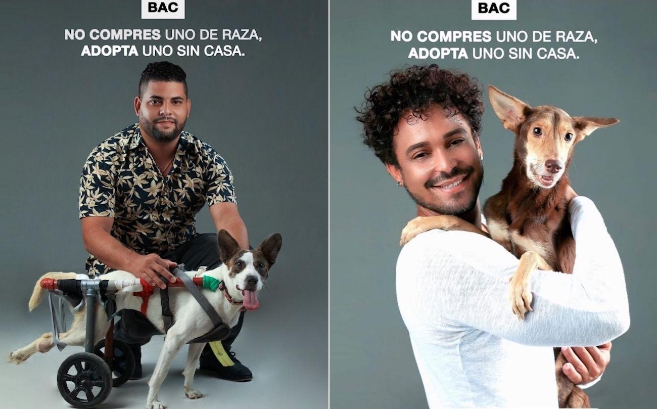 Imagenes de la campaña No compres uno de raza, adopta uno sin casa.