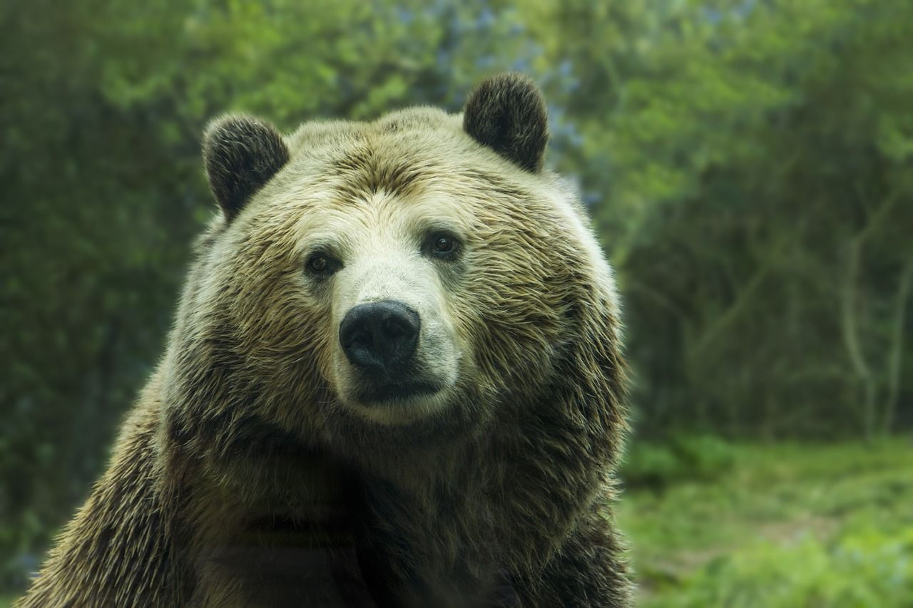 Cárcel para mujer por selfie con osa grizzly