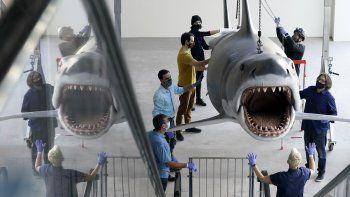 Una réplica en fibra de vidrio de Bruce, el tiburón del clásico de Steven Spielberg de 1975 Jaws (Tiburón), es montada en el nuevo Museo de la Academia de Cine en Los Ángeles el viernes 20 de noviembre del 2020.
