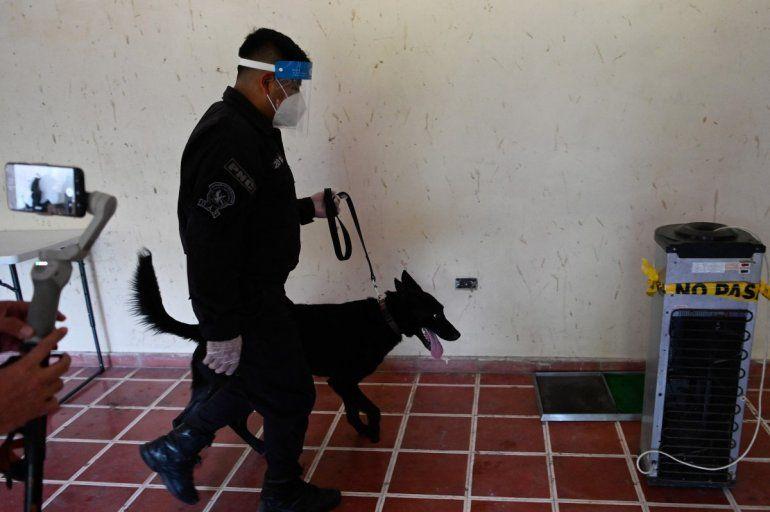 El perro rastreador Diamond participa en un entrenamiento para detectar COVID-19 en el Aeropuerto Internacional San Oscar Romero