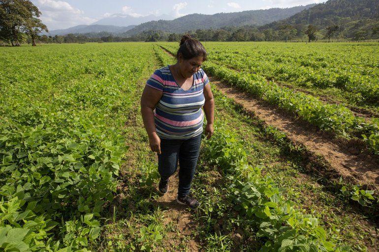 La activista nicaragüense Francisca Ramírez recorre un campo de frijoles en la comunidad de refugiados campesinos de Upala