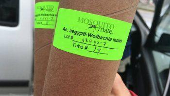 Unos 20.000 ejemplares del mosquito Aedes aegypti portadores de la bacteriaWolbachia fueron soltados en las inmediaciones de Cayo Hueso, al sur de Florida, con el objetivo de combatir la propagación del virus del Zika.