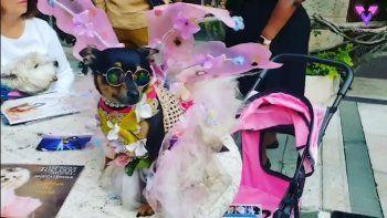 En el video colgado en YouTube se ven las prendas costosas que conforman el armario de este perro que pasó de estar en las calles a tener una vida de lujos.