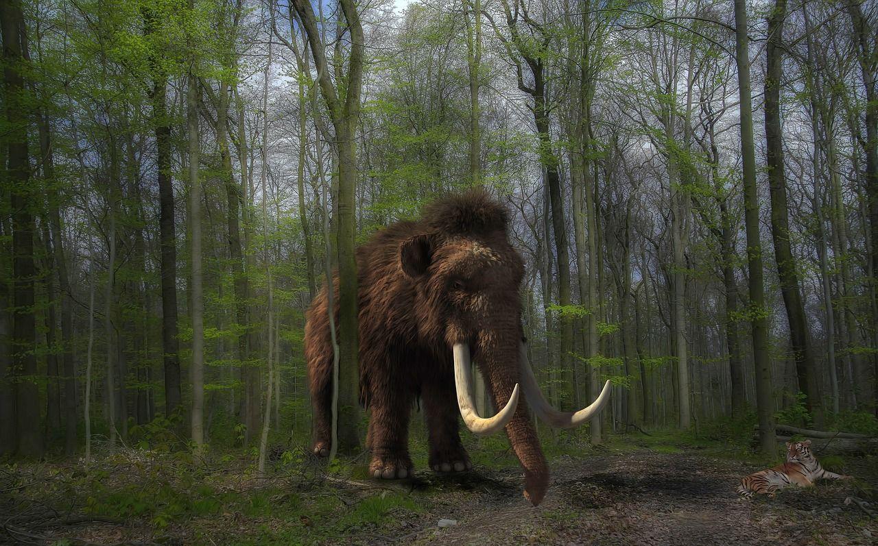 Intentan crear mamuts en laboratorio