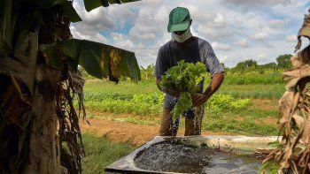 Un hombre lava una lechuga cultivada en los terrenos de su casa en Bahía Honda, en la occidental provincia de Artemisa, en medio de la crisis de alimentos acrecentada por la pandemia de COVID-19, en junio de 2020.