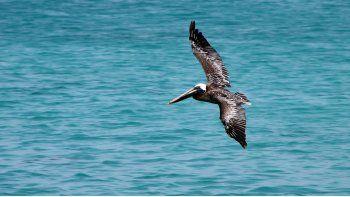 Se espera que el hábitat de anidación de aves marinas de alta densidad a lo largo de la costa tenga un aumento de aproximadamente el 80% y 70% en el riesgo de erosión e inundación debido al aumento del nivel del mar.