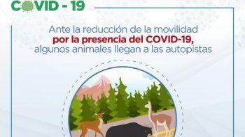 El Covid-19 cambió el mundo y mientras la actividad humana se encuentra en cuarentena, muchos animales que ahora se sienten tranquilos, han comenzado a aparecer en las carreteras,informa el Municipio de Quito desde su cuenta de Twitter.