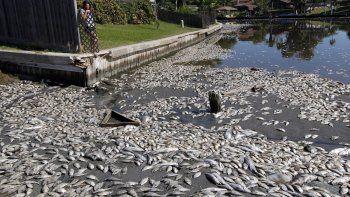 En esta fotografía de archivo del martes 30 de octubre de 2012, Kim Bertini mira a unos 15.000 peces muertos que terminaron cerca de su jardín trasero en el lago Madeline, en Galveston, Texas.