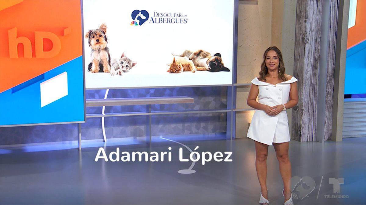 Adamari López presenta campaña especial para Telemundo.